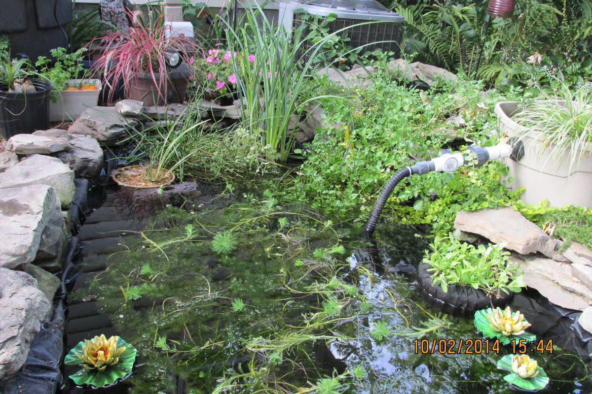 Help getting plants ready for winter season garden pond for Winter pond plants