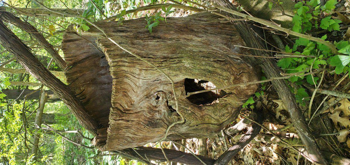 1 favorite tree.jpg