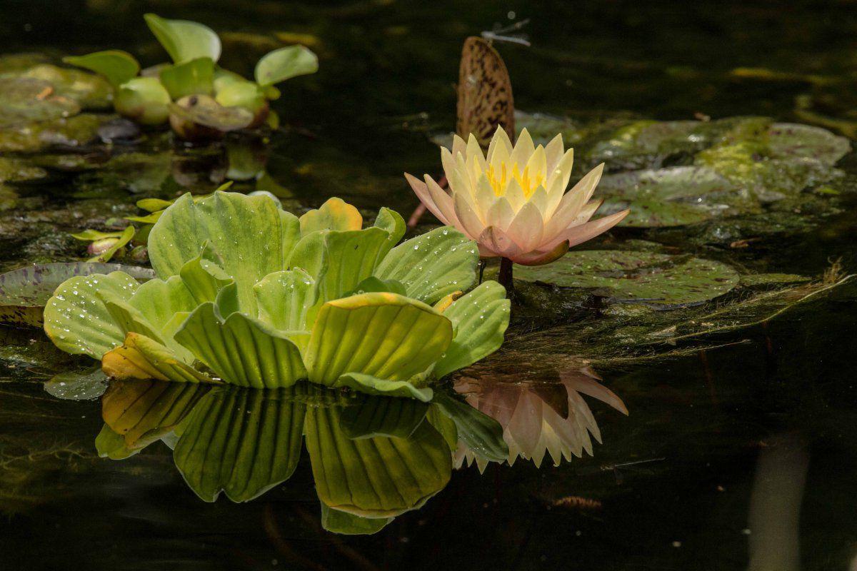 1 year aniversary pond 2019-55-2.jpg