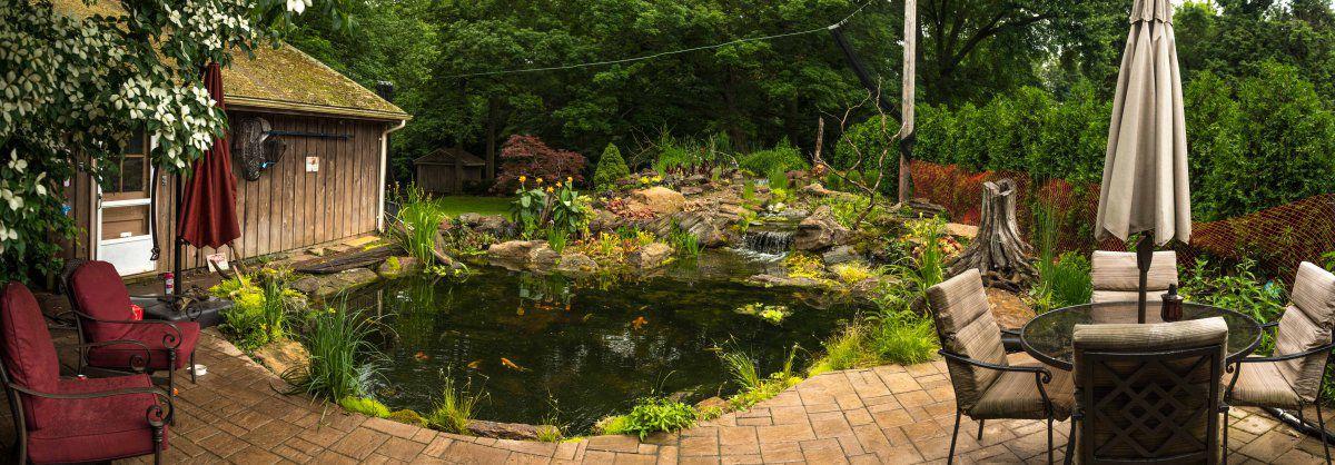1 year aniversary pond 2019-57-2.jpg