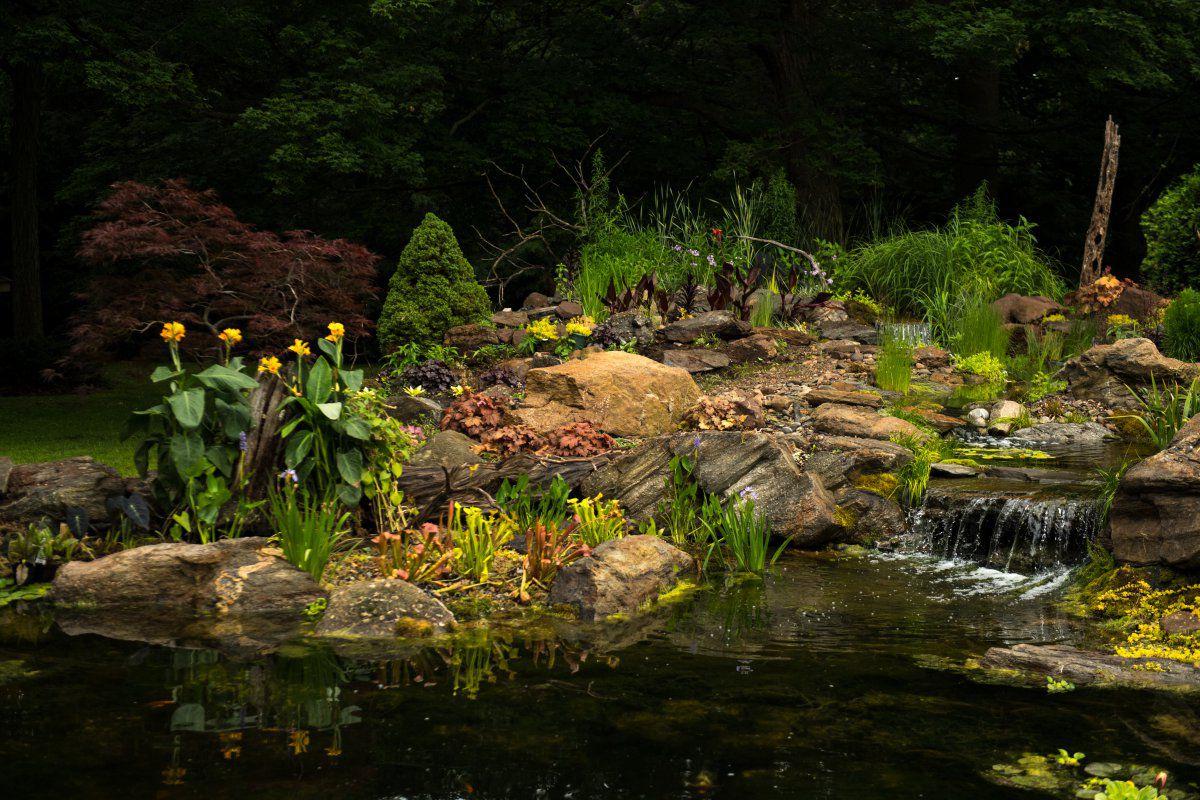 1 year aniversary pond 2019-58.jpg