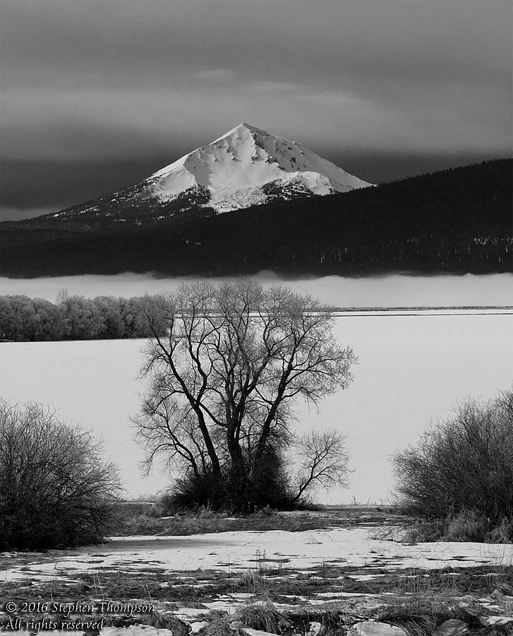 1040205 ice mcloughlin tree bw copy.jpg