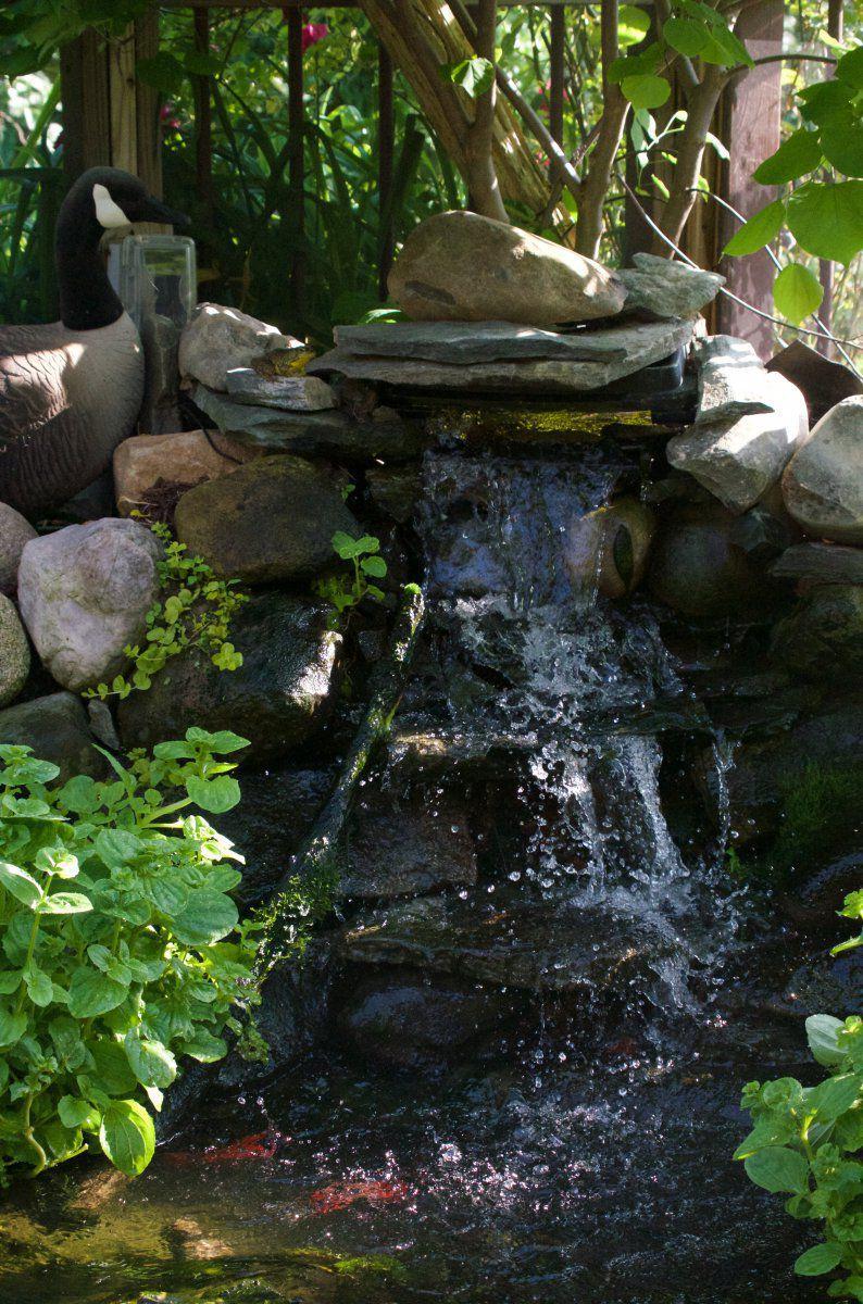 170609 - Julia, Jenny, Jasper, pond, fish, Frank 32.jpg