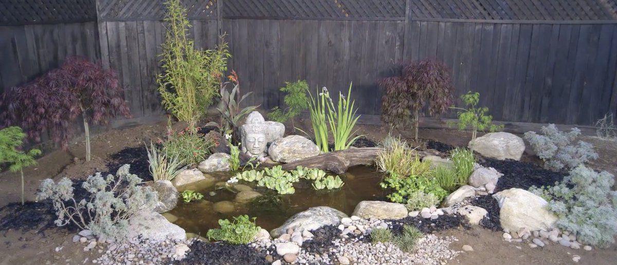 1frog pond.jpg