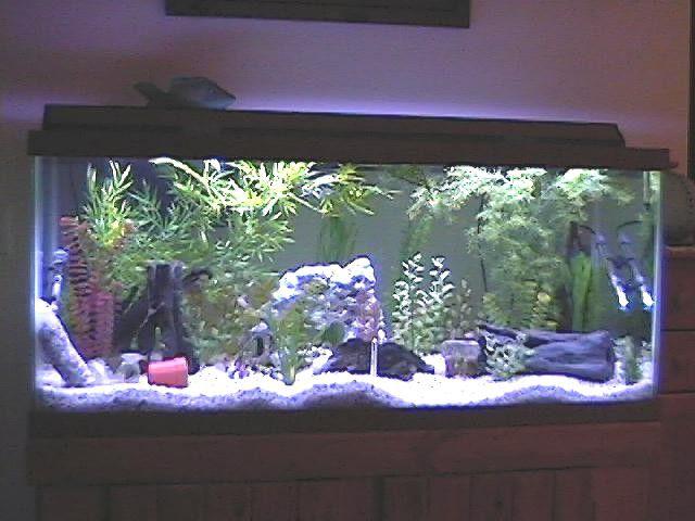 2004 new 75 gal aquarium 1.jpg