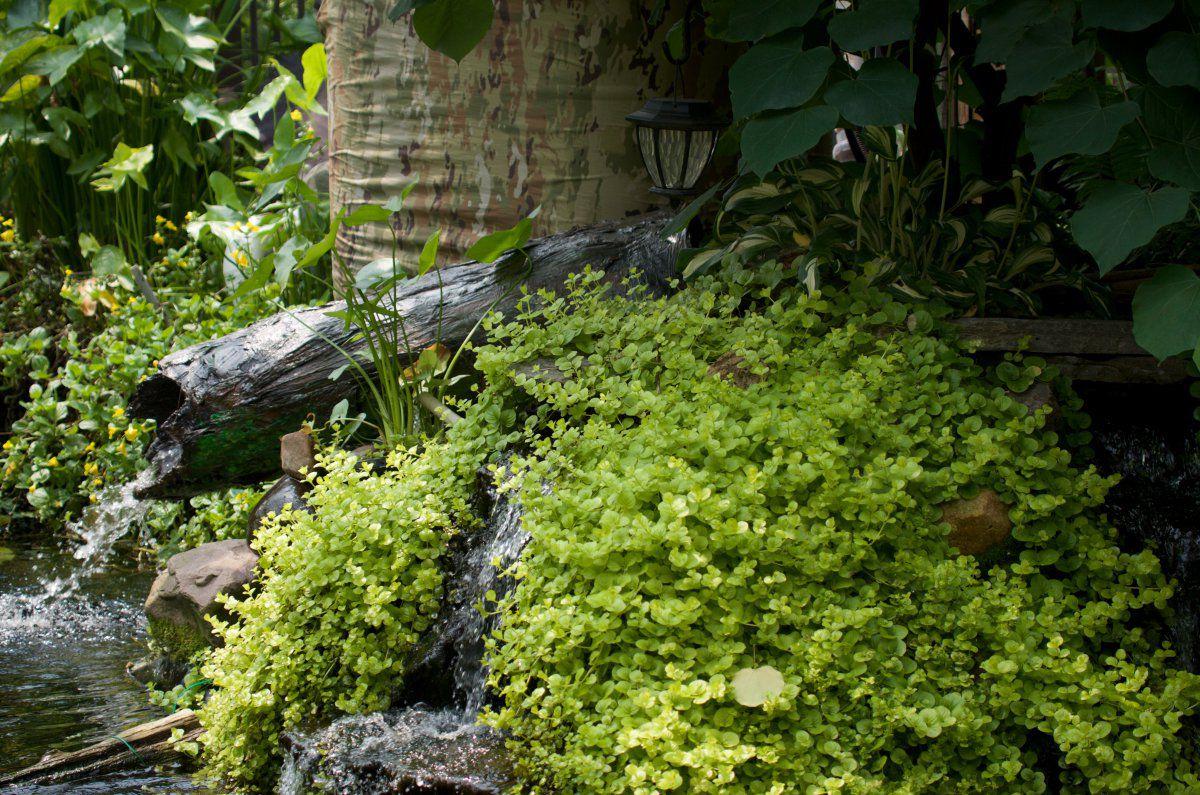 2107198 - pond, daylilies, turtles, frog on duck, wLilies 7 (1).jpg