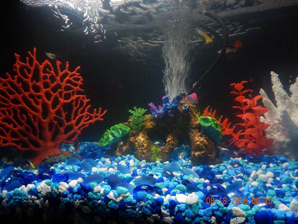 Turtle aquarium beta aquarium and tropical fish aquarium for Fish aquarium garden
