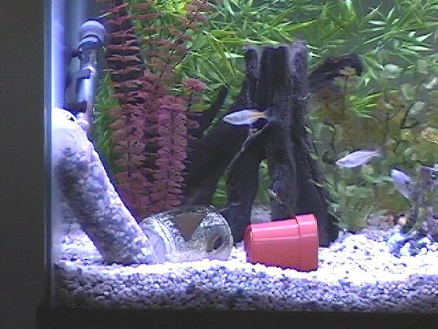 75 gal aquarium 5.jpg