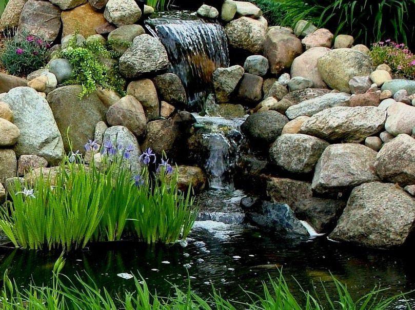 8  plants blue flag iris 5-26-2015.JPG