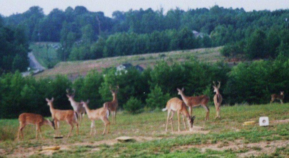 a day of deer 001.jpg