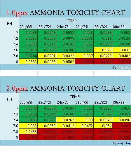 ammonia toxicity.jpg
