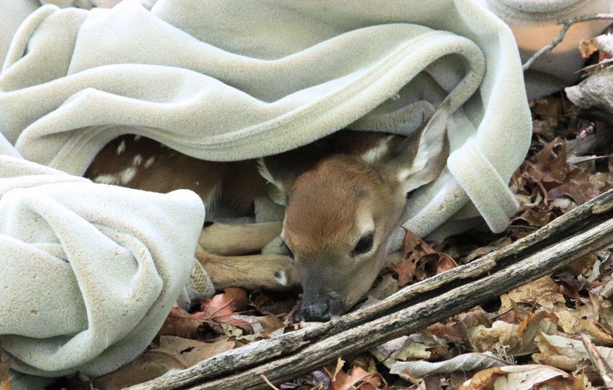 Bambi adventure 02.jpg