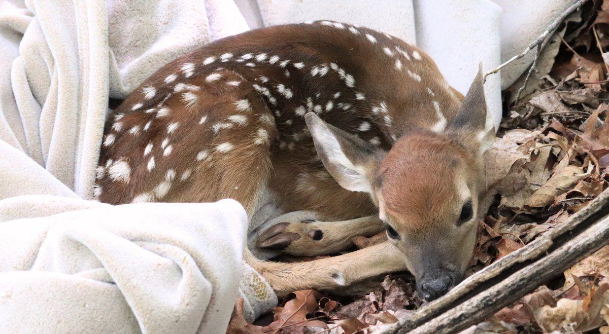 Bambi adventure 03.jpg