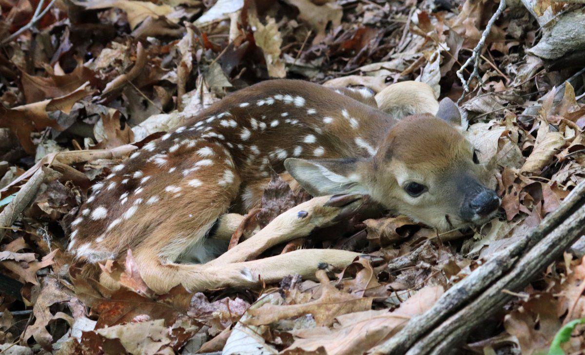 Bambi adventure 04.jpg