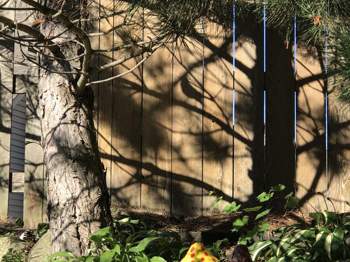 Bird shadow.JPG