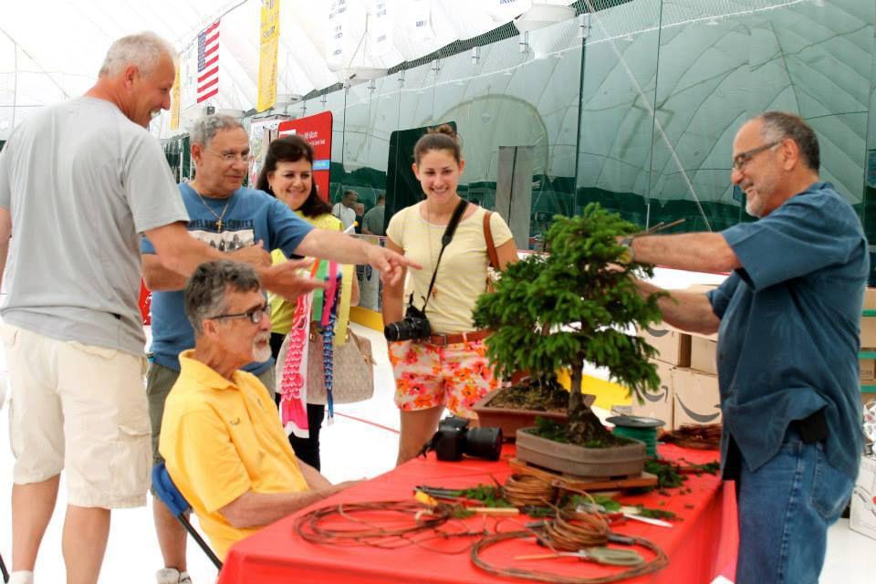carmen bonsai.jpg