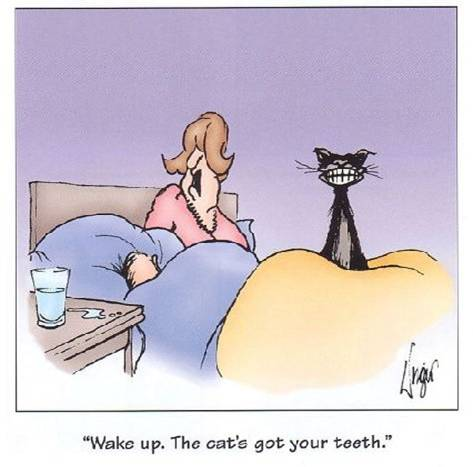 cat teeth.jpg
