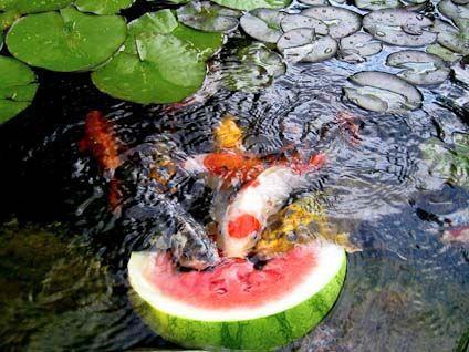 cb3eda5779be1646d33d691b874bd637--garden-ponds-koi-ponds.jpg