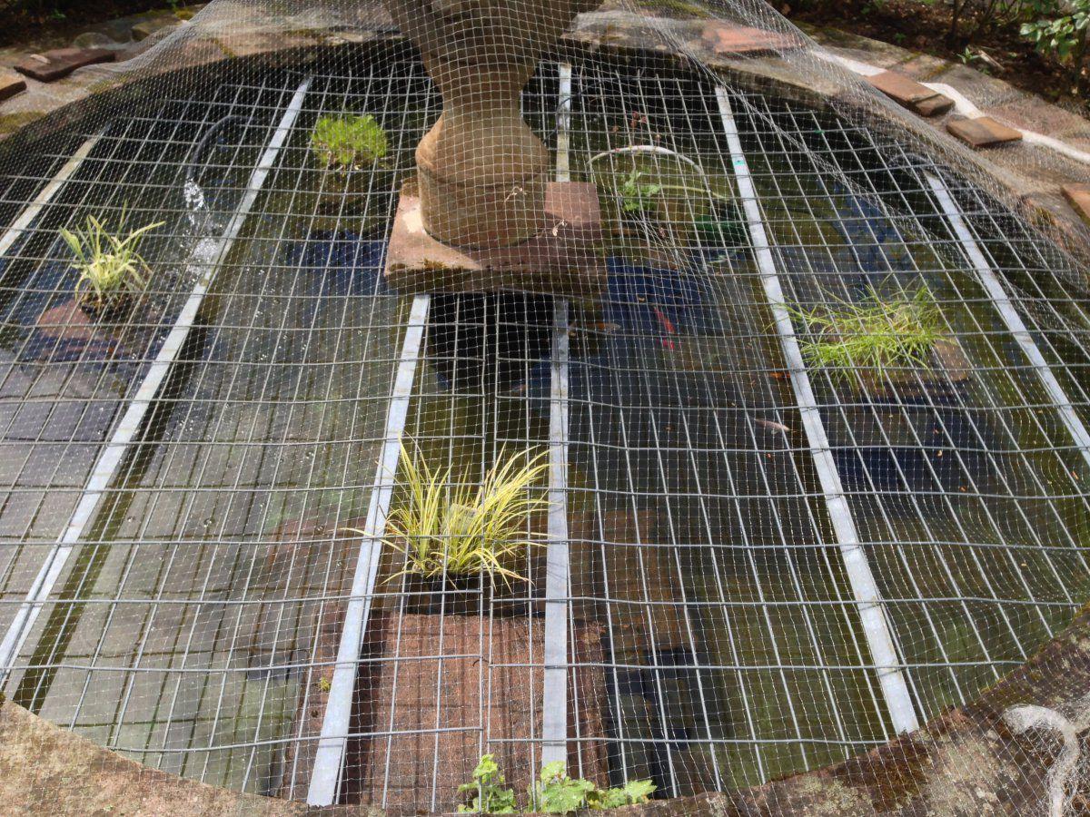 Clean pond.jpg