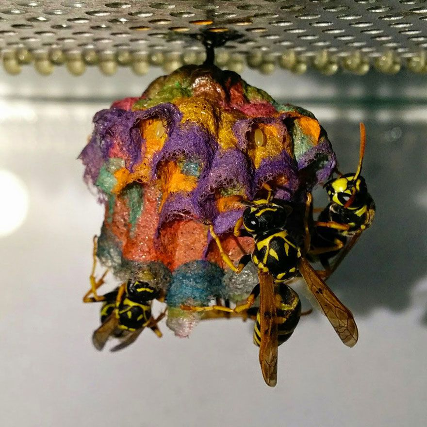 colorful-paper-wasp-nests-rainbow-mattia-mechetti-4.jpg