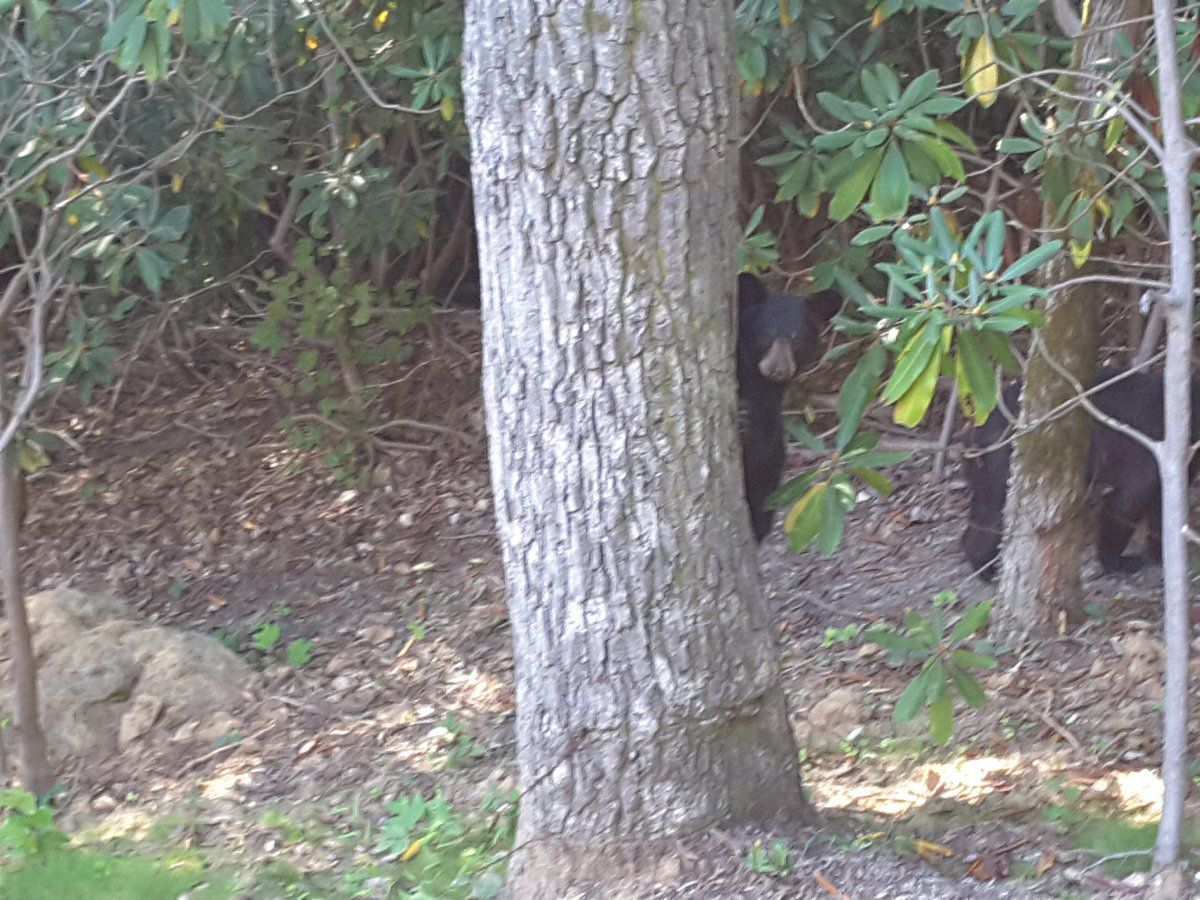 cub tree 2.jpg