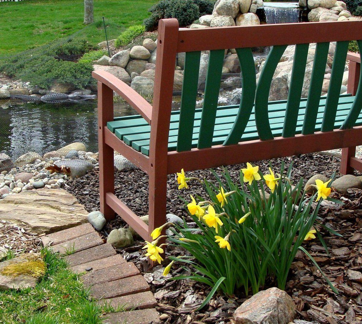 daffodils 2016-3-24 (2).JPG