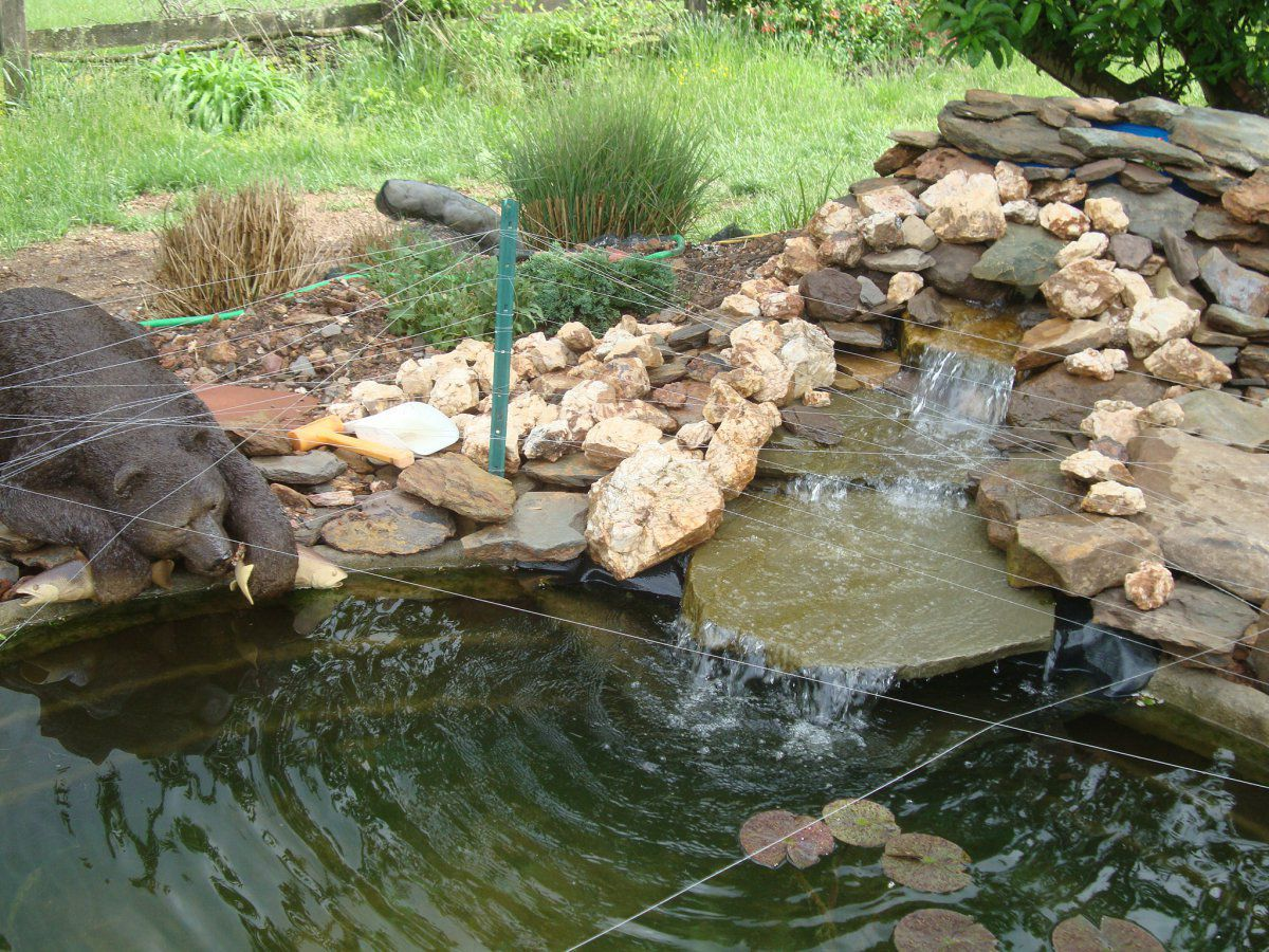 Stock tanks as ponds garden pond forums for Fish tank in pond