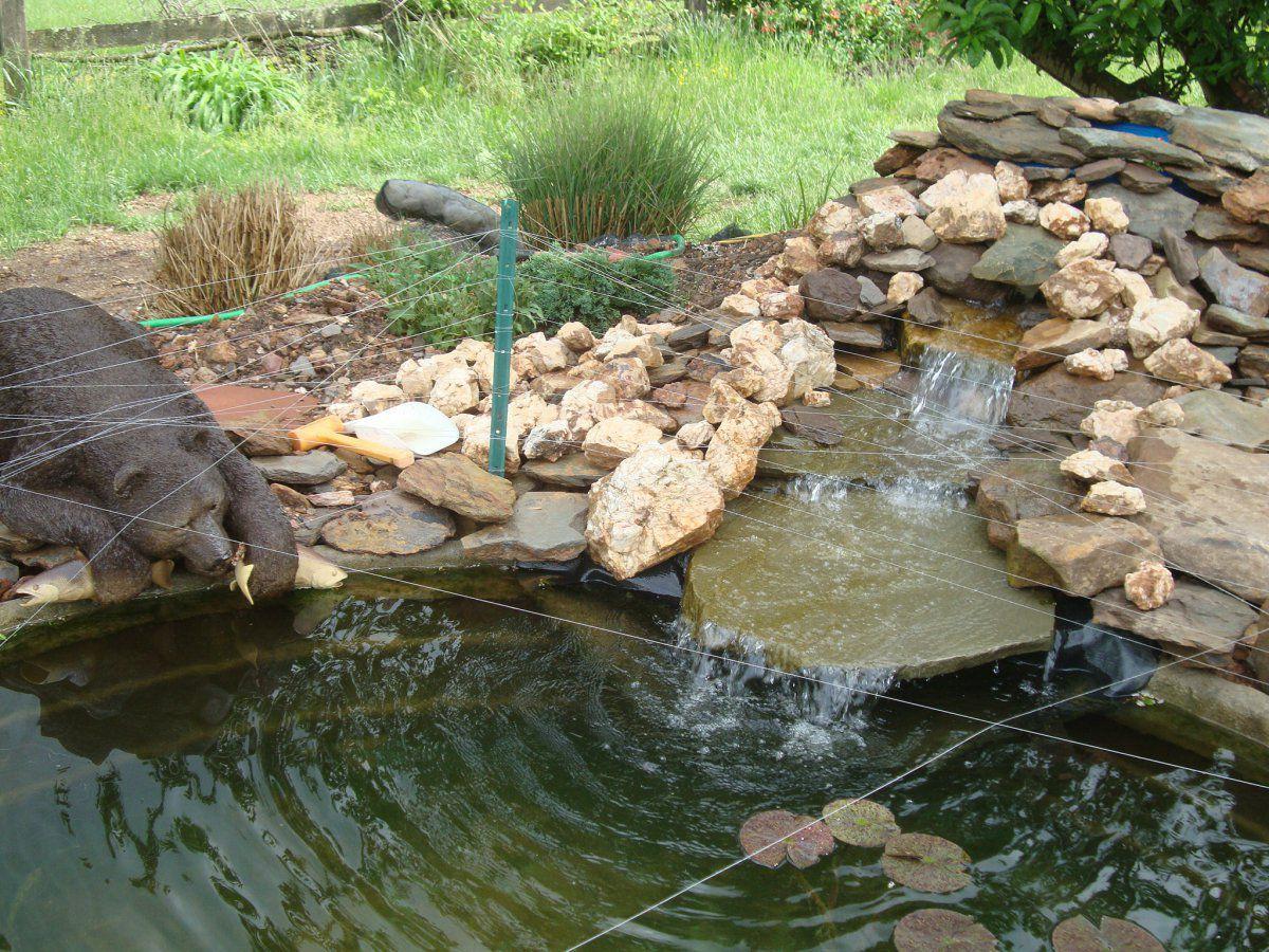 Stock Tanks As Ponds Garden Pond Forums