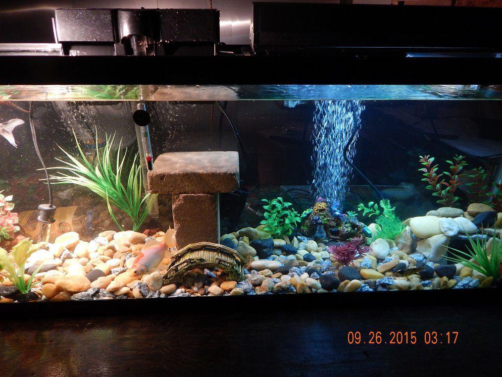 Indoor habitat koi garden pond forums for Indoor koi fish tank