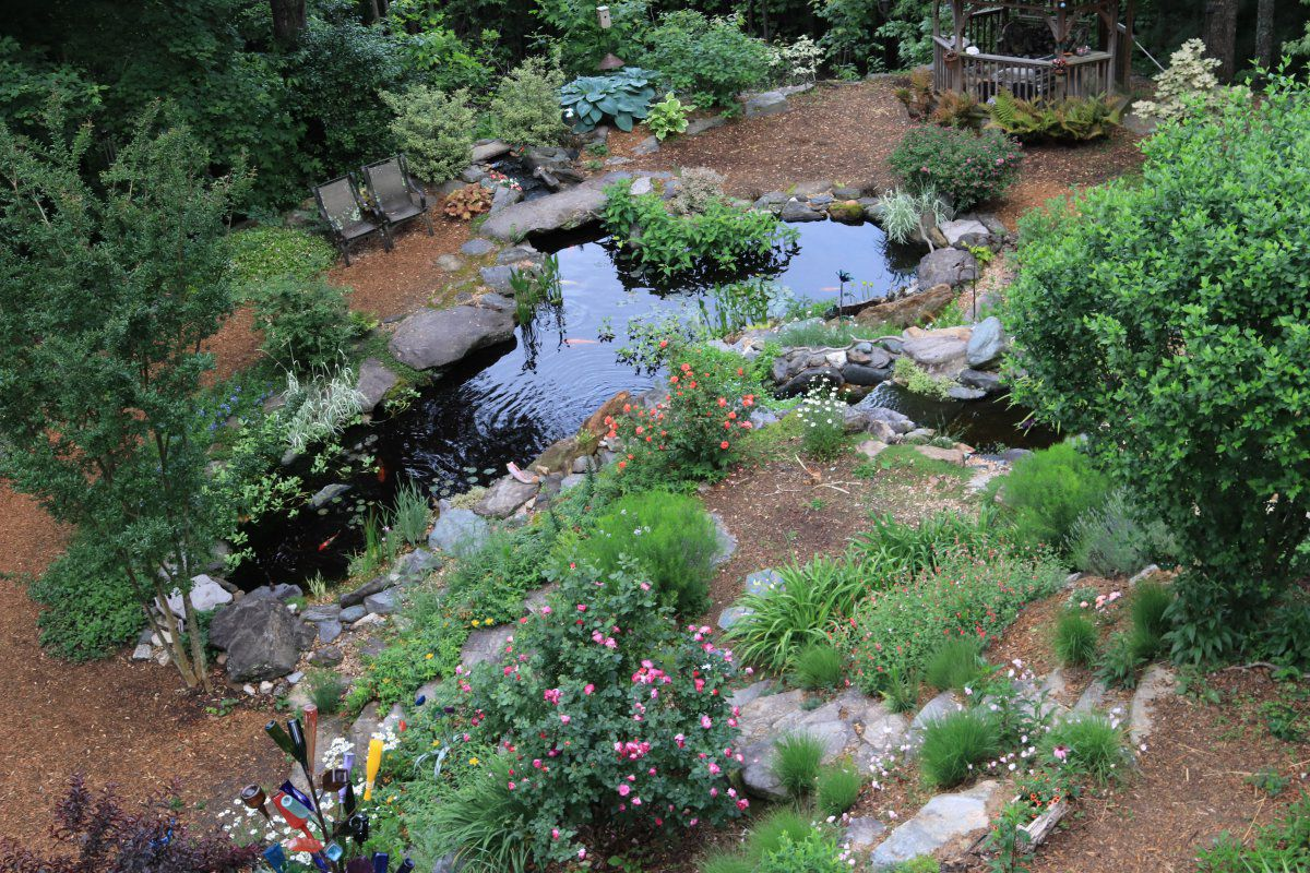 early summer pond 01.JPG