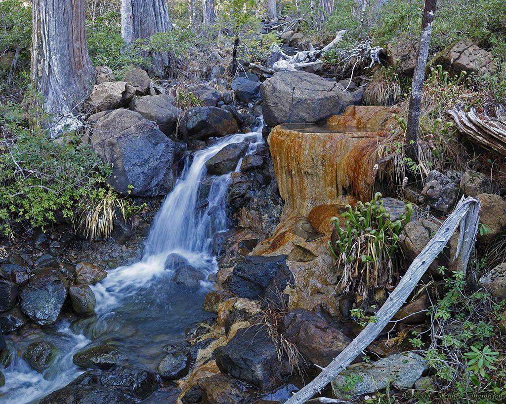 elk river flowstone cobra lilies.jpg
