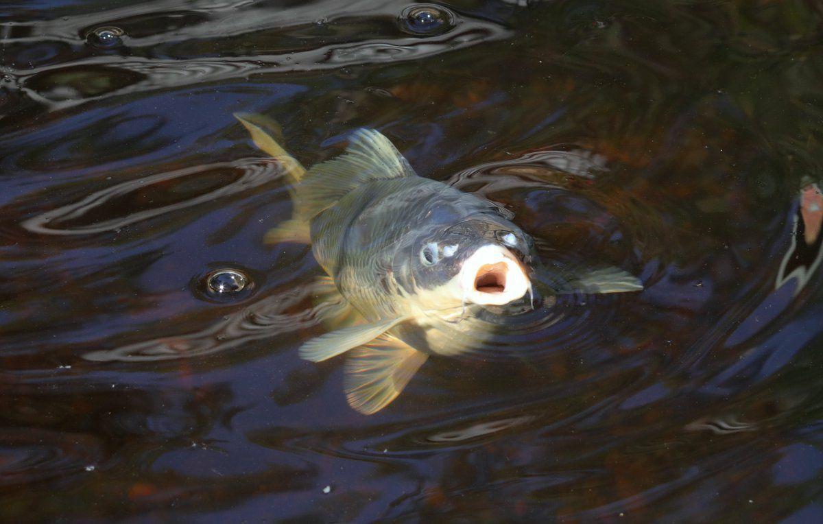 fall fish faces 02.JPG