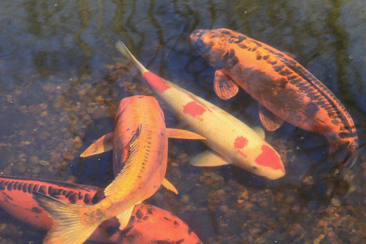 fish in spring 01.jpg