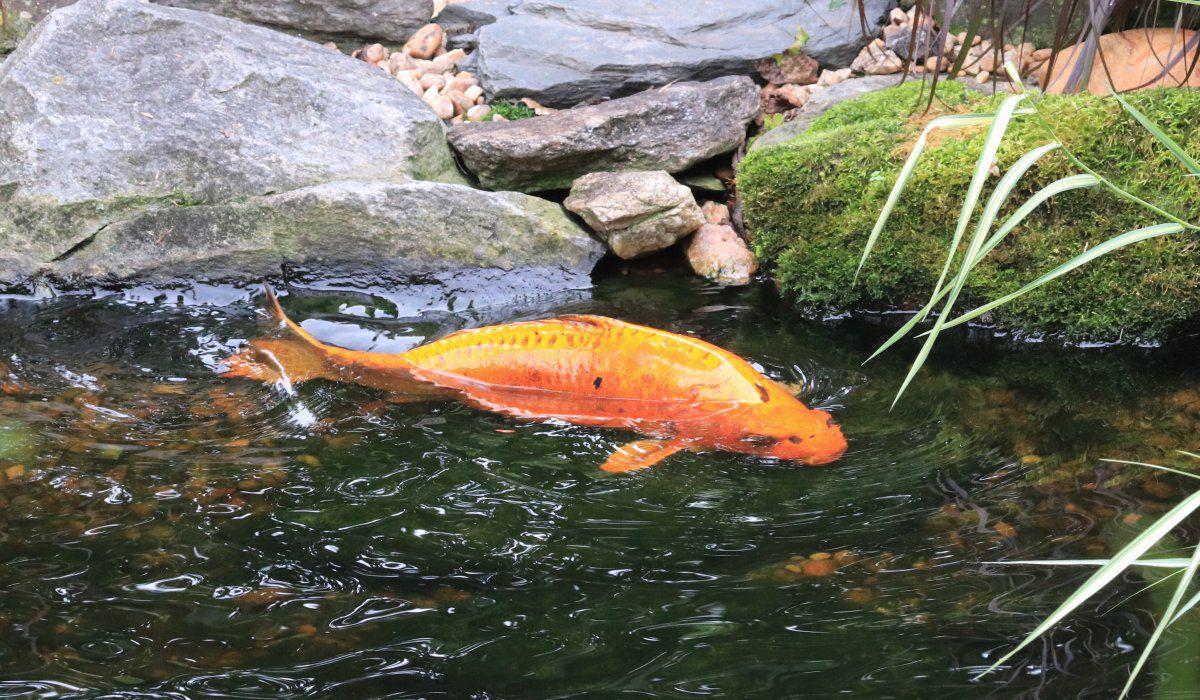 fish outta water 01.JPG