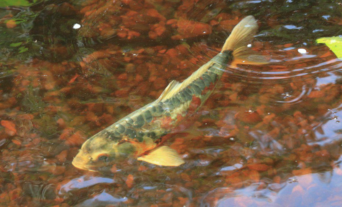 fish pics 03.jpg