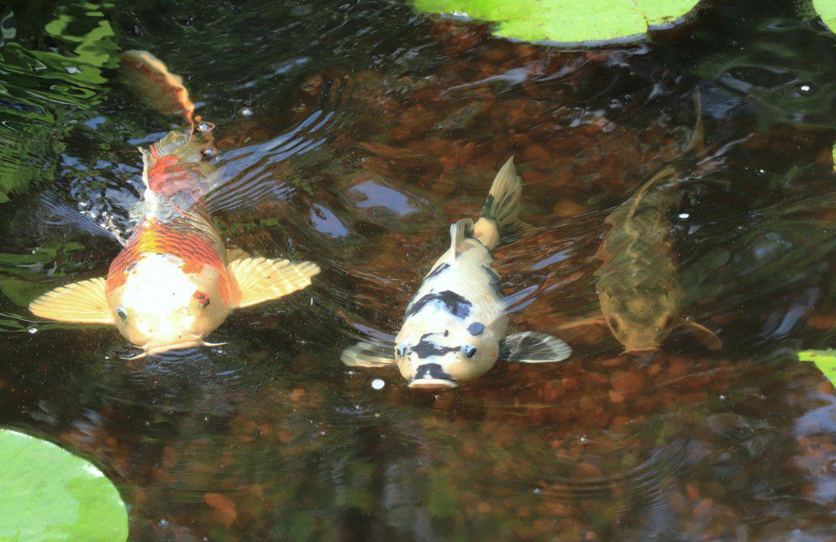 fish pics 04.jpg