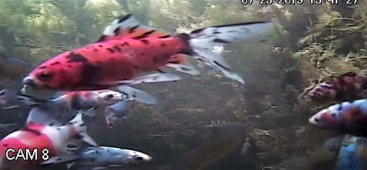 fish7 (2).JPG