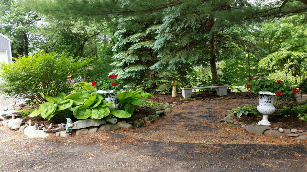 front garden2.jpg