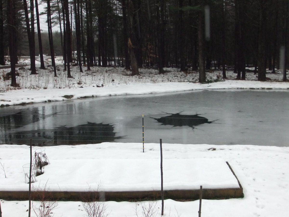 frozen pond 003.JPG