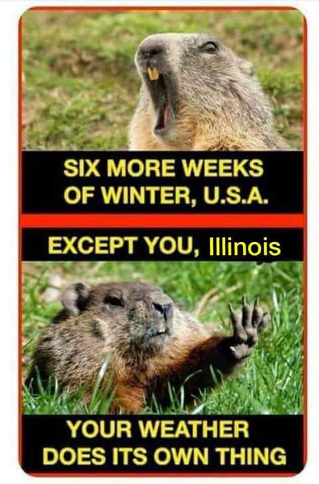 groundhog funny.jpg