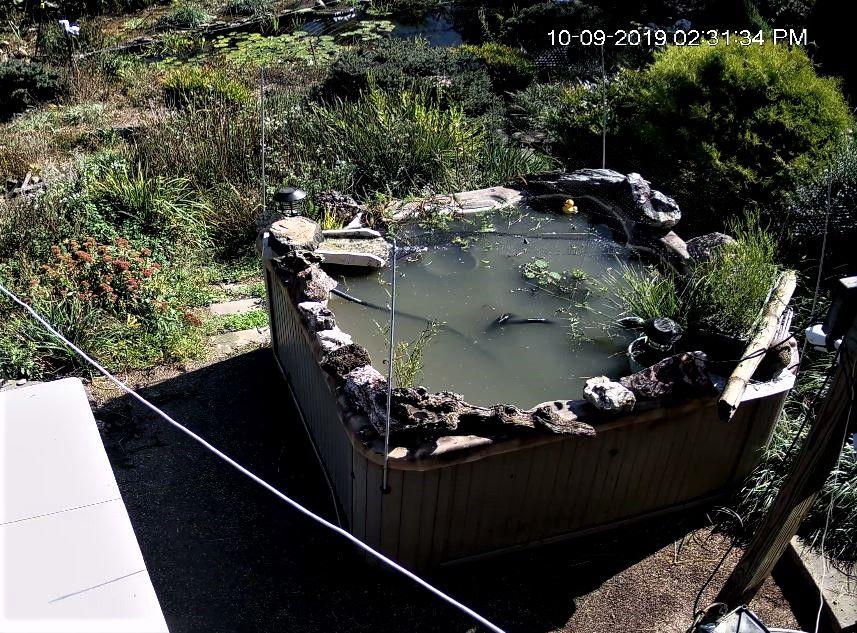 ht pond after.JPG
