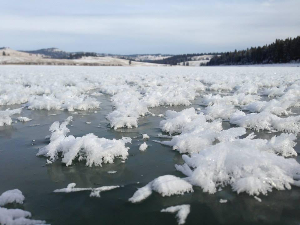icefans.jpg