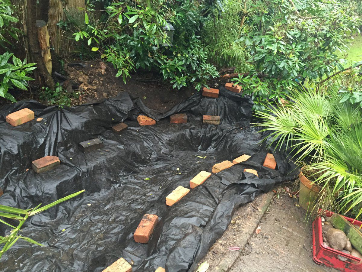 Wildlife pond to fish pond garden pond forums for Pool koi manchester