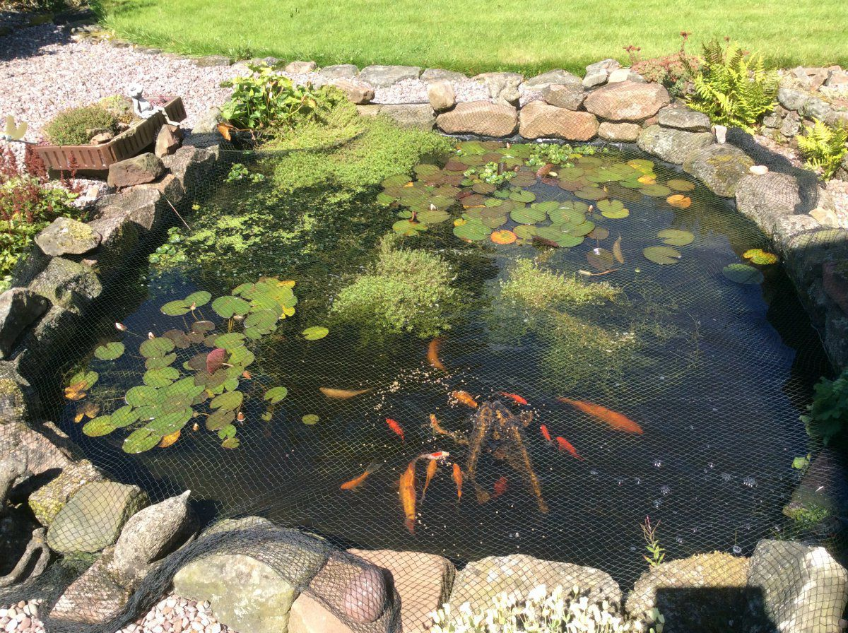 Couple questions on submerged plants garden pond forums for Garden pond questions