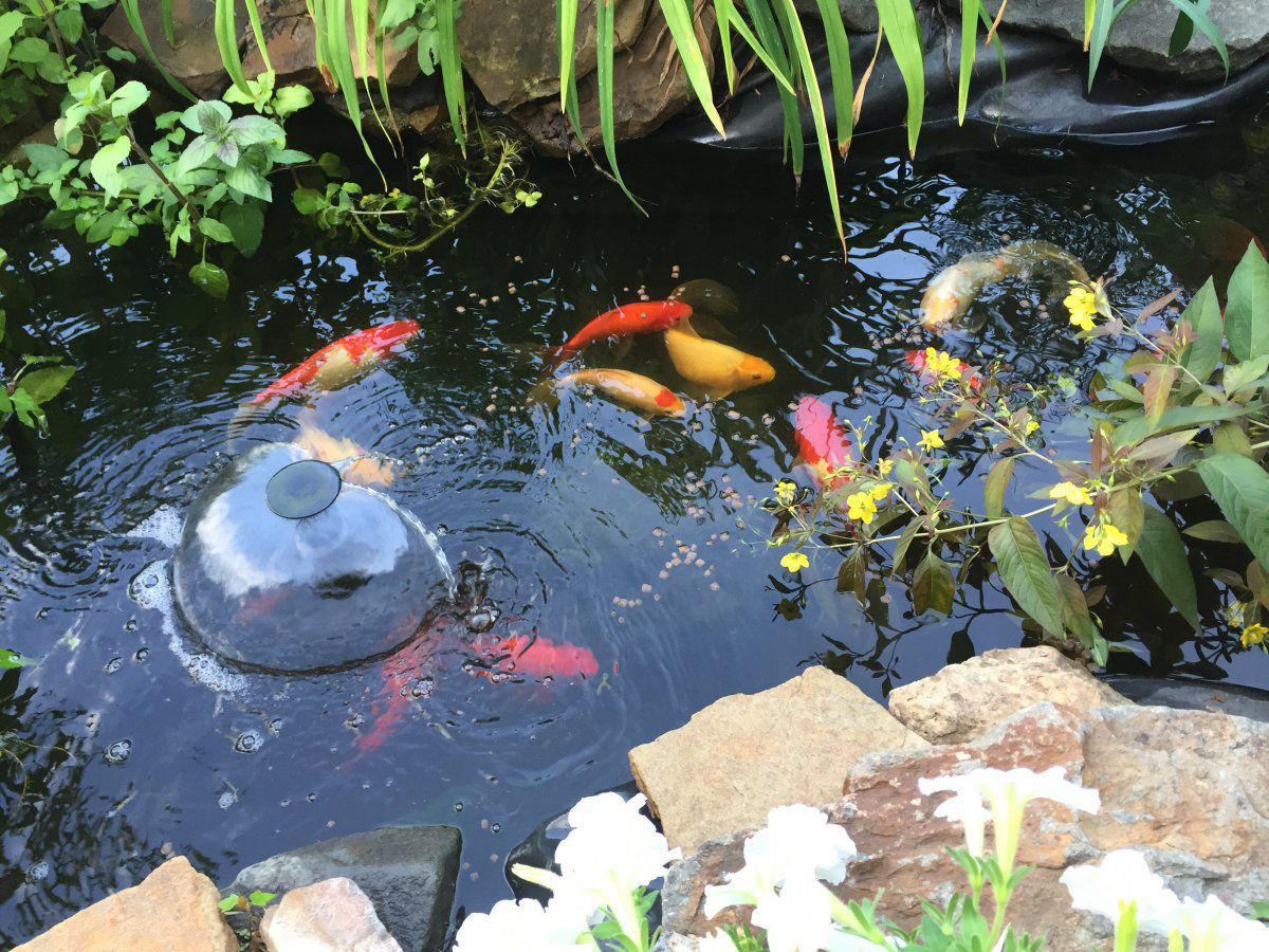 First home first pond water is dirty garden pond forums for Goldfish pond pump