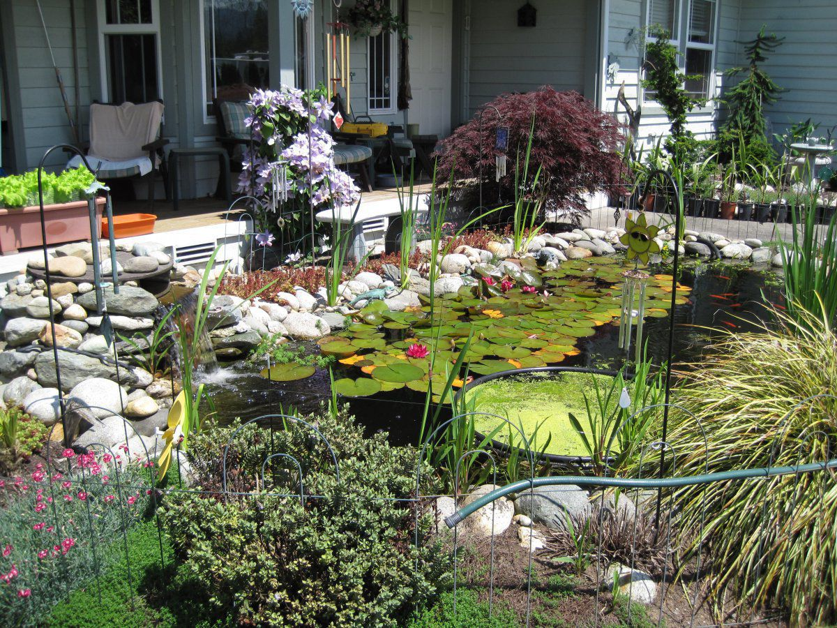 Hi all new here half done small pond question about plant for Garden pond questions