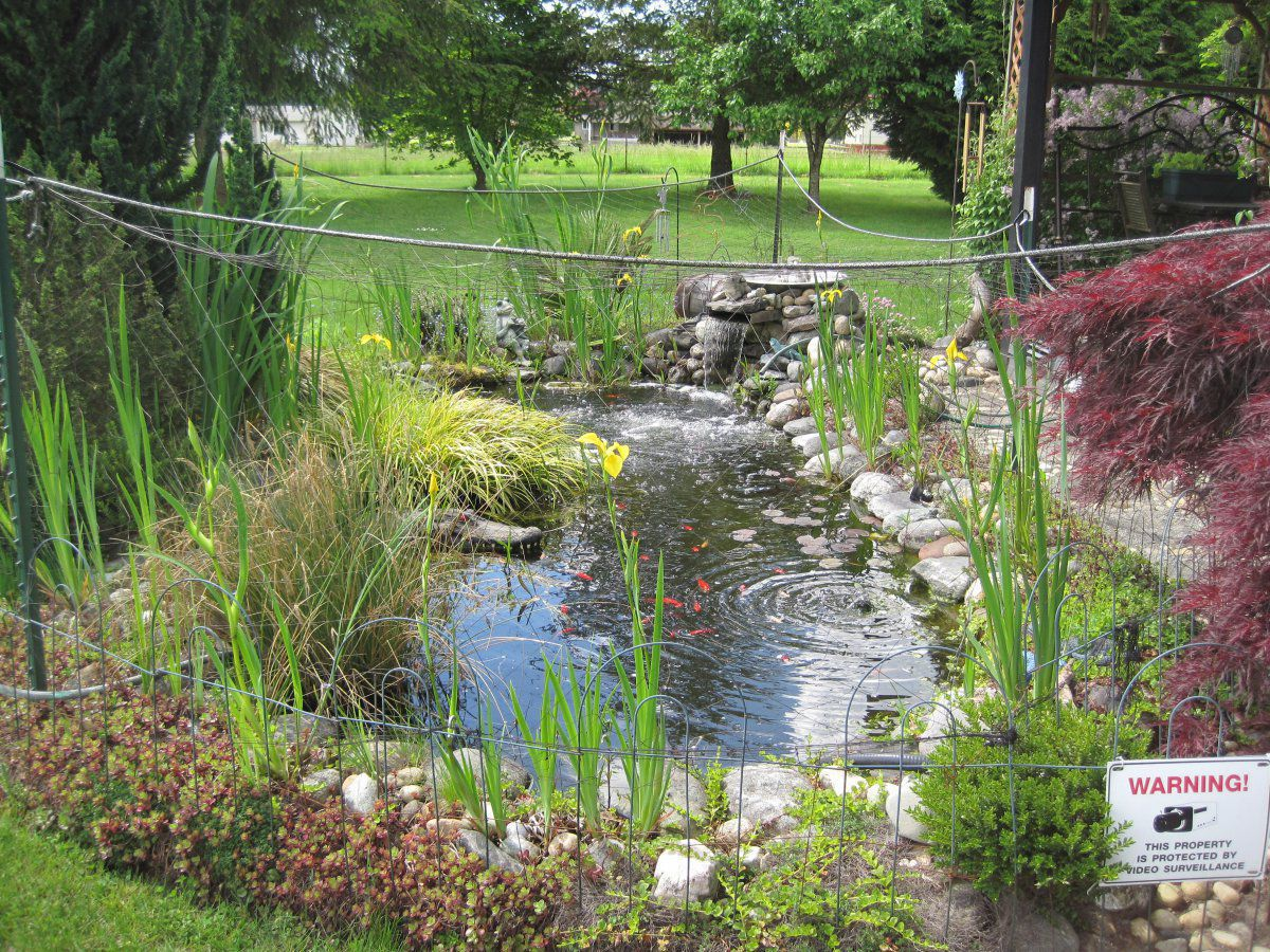 Landscaping hardscaping around your pond garden pond forums for Landscaping around ponds