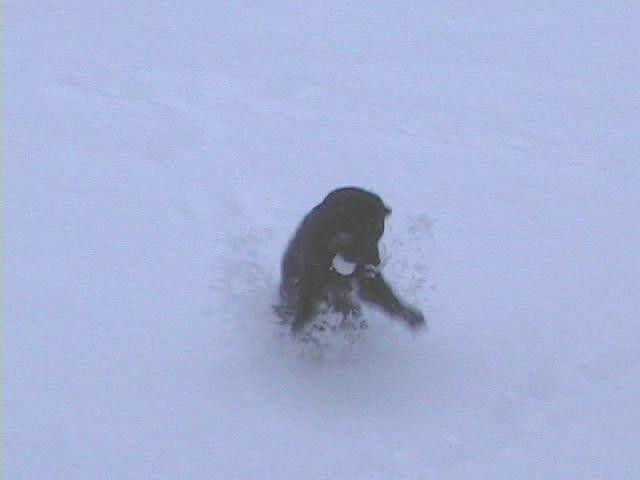 Jan. 2004 Boo  snow 15.jpg