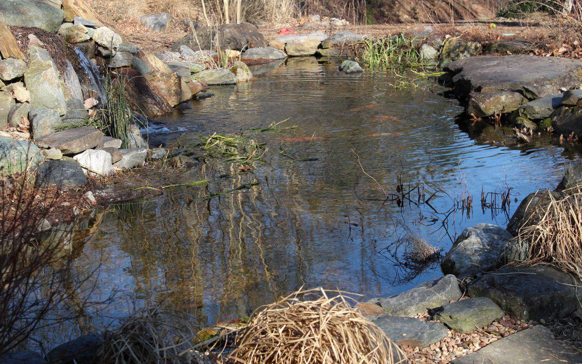 late winter pond 01.jpg