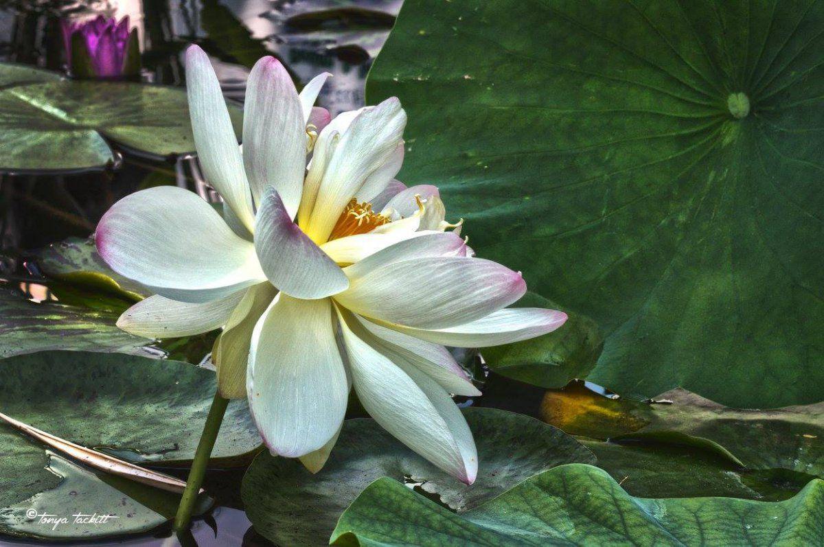 lily in profile zilker.jpg